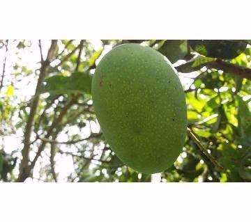 চাঁপাই নবাবগঞ্জের গোপাল ভোগ আম (20 কেজি)