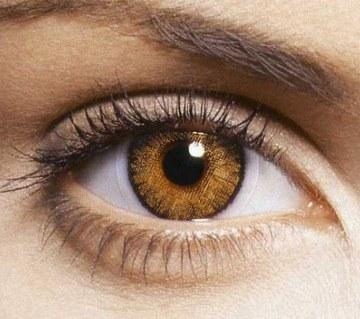 Freshlook Contact Lenses (Honey)