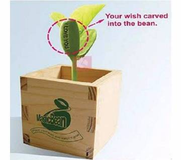 Magic bean for special gift