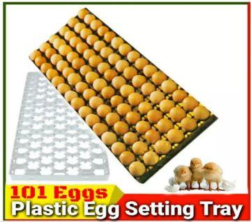 Plastic Egg Tray  (101 Eggs)