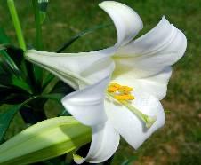 Yardley Lily of the Valley লেডিজ বডি স্প্রে বাংলাদেশ - 5599772