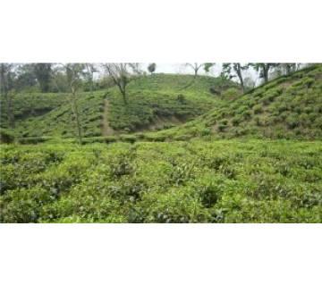 Dhaka – Srimongal – Sylhet – Dhaka