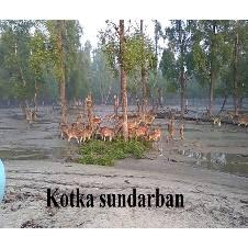 সুন্দরবন ভ্রমন বাংলাদেশ - 6502601