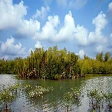 সুন্দরবন ভ্রমন বাংলাদেশ - 6502604