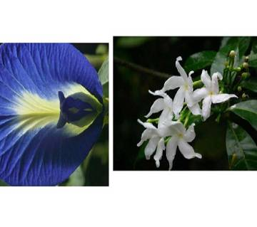 Clitoria Ternatea + Kathmaloti Tree - Combo Offer