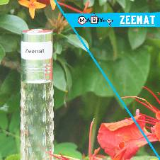 Zeenat Attar - 6 ml (France)