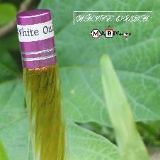 White Oudh Attar - 4 ml - Vietnam