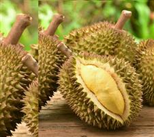 Durian থাই কাঠাল ( ১ কেজি)
