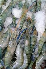 Large shrimp - 1 kg