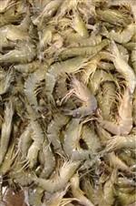 Small shrimp ( 50-60 pieces at 1 kg)