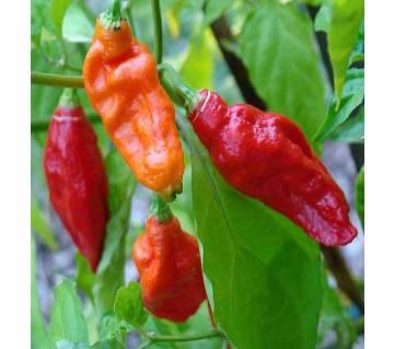 Bombai Chili Seeds (10 Seed)