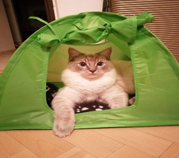 Tent For Cat