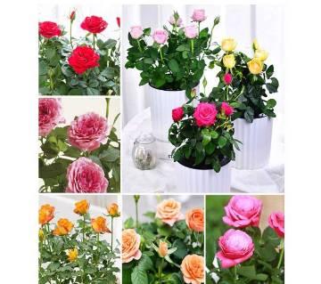 200pcs Bonsai, Different Rose Flower Lotus trees Seeds