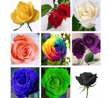 50 Pcs Mixed Colourful Rose Flower Plants Natural Growth Seeds