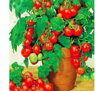 100pcs/lot Bonsai Tomato Garden Plant Seeds