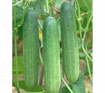 20 Pcs  F1 Hybrid Cucumber Seeds