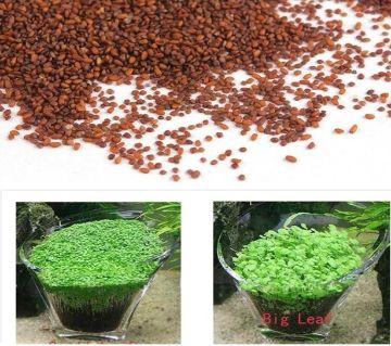 200 Pcs Quick Grow Aquarium Big Leaf Grass Plant Seeds
