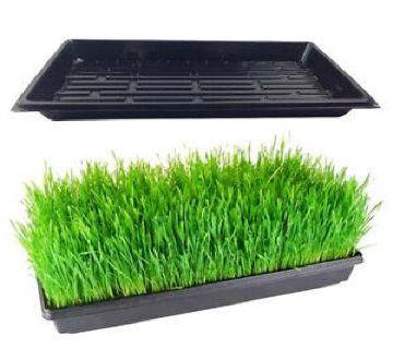 Seed Germination Trays