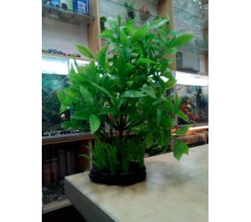 Aquarium Plant