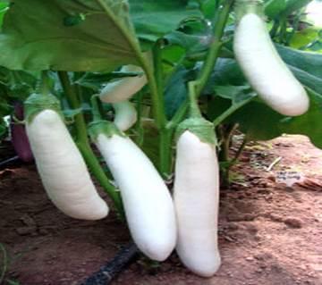Brinjal F1 Hybrid White Long Seed