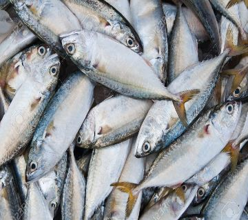 MACKEREL SEA FISH KG-1kg