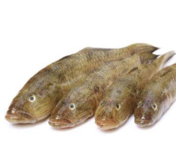 Baila FISH-1kg