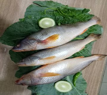 POYA FISH SEA  - 1 KG