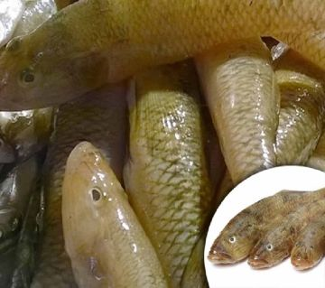 BELE FISH SEA 1KG