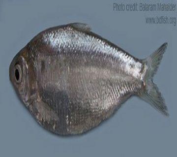CHAPILA FISH (HAWOR)-1kg