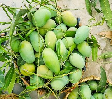 Amrapali Mango 20KG Package