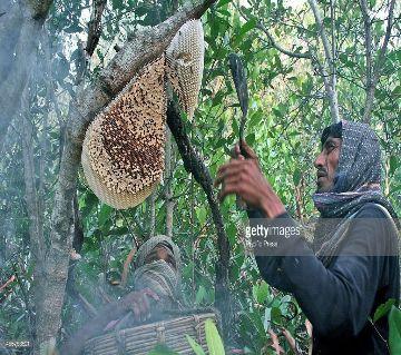 Sundarban Real Honey 1000gm