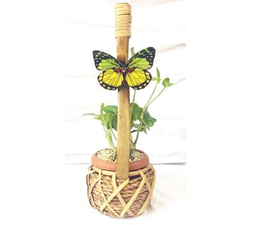 Money plant in Ektara Shaped tub with Butterfly
